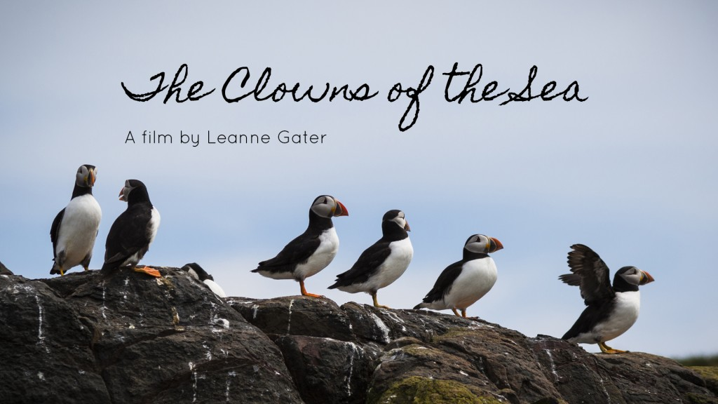 The Clowns of the Sea